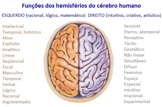 hemisfc3a9rios-esquerdo_e_direito-do-cc3a9rebro-humano
