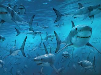 https://linguacultura.files.wordpress.com/2014/05/ff258-tubaroes.jpg