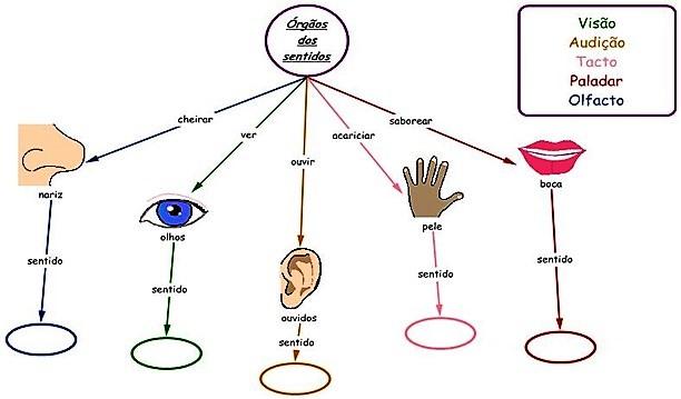 pt_corpo_orgaos-sensoriais